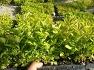 2020년 산채모종, 산나물모종 분양합니다.