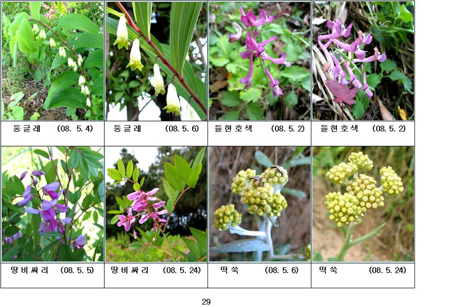 봄에 피는 야생화(5월-8)