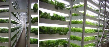 아름다운난세상 :: 미래지향 환경농업 도시형 식물공장(Vertical Farm)