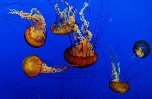 바다세계  # 7